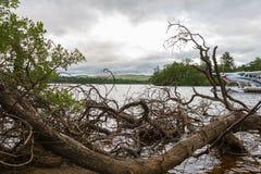Klipp trädfilialer på sjökust och hydroplane, Loch Lomond Arkivbilder