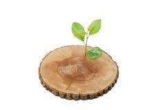 Klipp trädgräsplangrodden Royaltyfri Fotografi