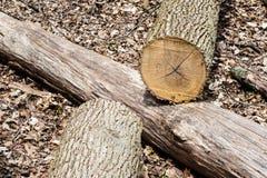 Klipp trädinloggningen en annan inloggningsskog Fotografering för Bildbyråer