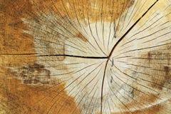Klipp trädstammen - textur av trä - ringformiga cirklar royaltyfria bilder