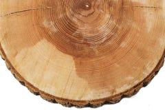 Klipp trädtillväxtcirklar Arkivfoton