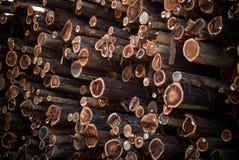 klipp trees Arkivfoto