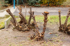klipp trees Fotografering för Bildbyråer