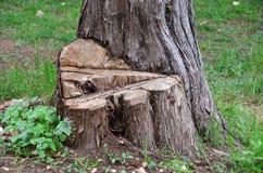 Klipp treestammen Royaltyfria Foton