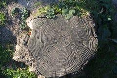 Klipp vision för trädstammen från över royaltyfri bild