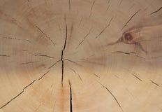 Klippa av forntida trä royaltyfri bild