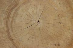 Klippa av forntida trä royaltyfri fotografi