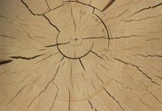 Klippa av forntida trä royaltyfria foton