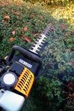 klippa den arbeta i trädgården häcken Arkivfoton