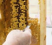Klippa en honungskaka Arkivbild