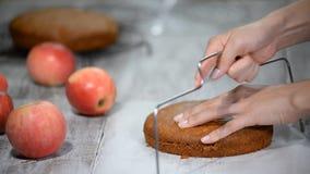 Klippa en konfektrad av sockerkakan konfekt Ljusbrun kaka för matlagning stock video