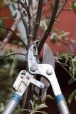 Klippa en treelövruska arkivfoto