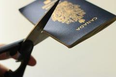 Klippa ett kanadensiskt pass Begrepp av att avsäga sig medborgarskap eller att lämna landet Dissastisfaction med Kanada royaltyfri fotografi