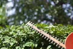 klippa för buskar Fotografering för Bildbyråer