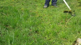 klippa gräs stock video
