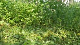klippa gräsmannen stock video