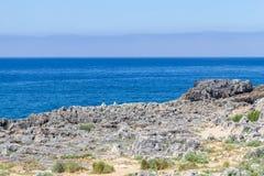 Klippa och hav i Cascais Royaltyfria Foton