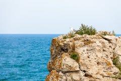Klippa och seagull Royaltyfri Fotografi