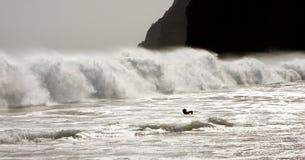 Klippa och vågor fotografering för bildbyråer