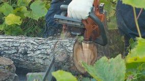 Klippa till och med trä med chainsawen stock video