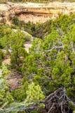 Klippaboningar i Mesa Verde National Parks, Co, USA Royaltyfri Bild