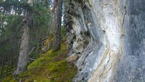 Klippaframsida i en skog Arkivfoton