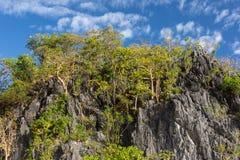 Klippaframsida med tropiska träd Royaltyfria Bilder
