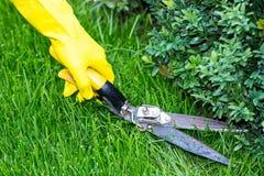 Klippande gräs med sax Royaltyfria Bilder
