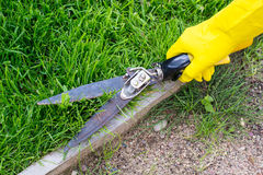 Klippande gräs med sax Royaltyfri Foto
