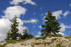 klippatrees arkivfoton