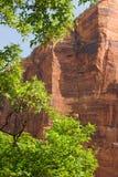 Klippen des roten Sandsteins, Zion National Park, Utah Lizenzfreies Stockfoto
