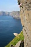Klippen van Moher, Ierland Royalty-vrije Stock Afbeelding