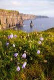 Klippen van Moher met Wilde bloemen Stock Afbeeldingen