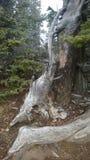 Klippen zijtunnel twee gevallen bomen Royalty-vrije Stock Afbeelding