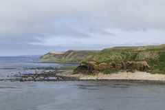 Klippenküstenlinie der Insel sonnigen Tages Berings Stockbilder