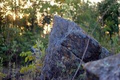 Klippenrots, rotsen in bos Royalty-vrije Stock Fotografie
