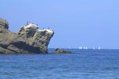 Klippenvogels en varende boten stock foto's
