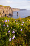 Klippor av Moher med lösa blommor Arkivbilder