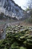 Klippor och träd vid buffelfloden, Arkansas Arkivfoto