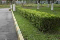 Klippt buskestaket med den snabba banan Arkivfoto