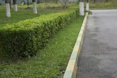Klippt buskestaket med den snabba banan Royaltyfria Foton