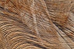 Klippt closeup för trädstam Royaltyfri Bild
