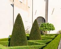 Klippt cypressträd i den Mantua staden i vår Arkivfoton