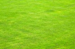 Klippt grön gräsmatta arkivfoton