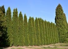 Klippt grönt staket Fotografering för Bildbyråer