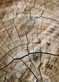 klippt har treen Arkivbilder