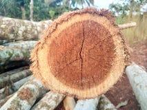 Klippt/journaler trä Royaltyfria Bilder