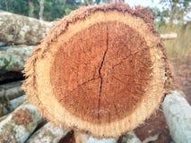 Klippt/journaler trä Arkivbilder