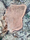 Klippt/journaler trä Royaltyfria Foton