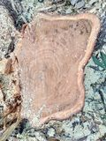 Klippt/journaler trä Arkivbild